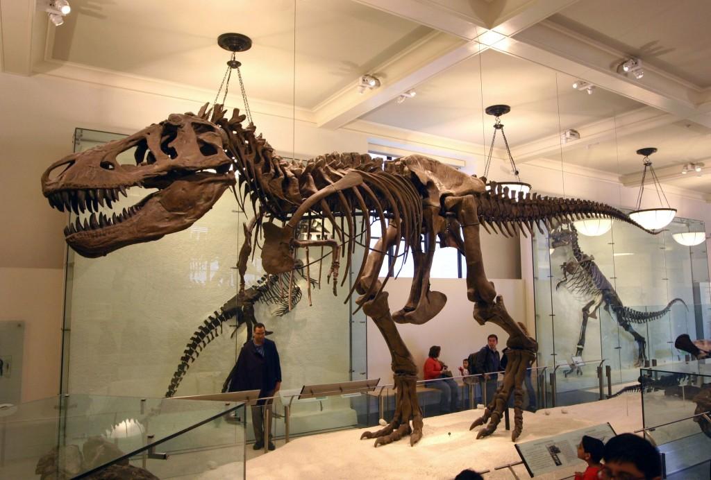 Tyrannosaurus Rex tiranosaurio trex esqueleto