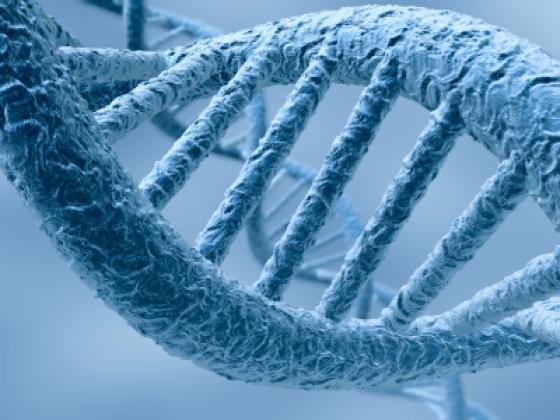 adn cromosomas genes informacion