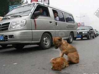 amigo-perro-mejor-fiel-1