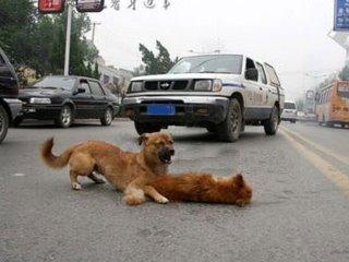 amigo-perro-mejor-fiel-2