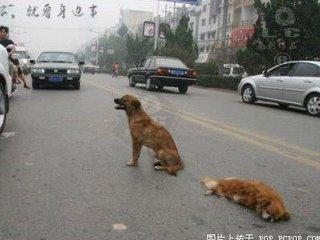 amigo-perro-mejor-fiel-3