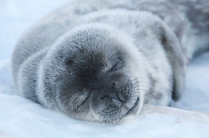 animales-bonitos-foca