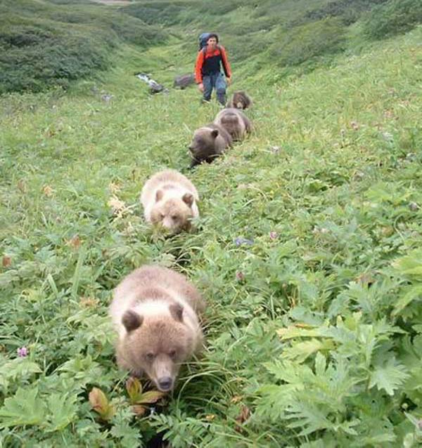 animales-bonitos-osos