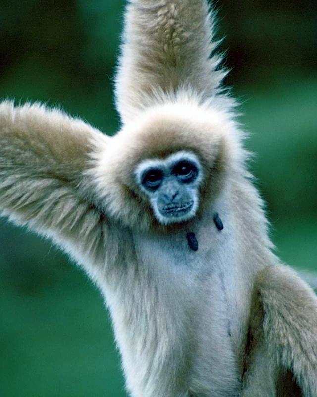animales-graciosos-bonitos-simios-monos-2