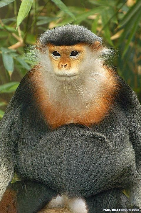 animales-graciosos-bonitos-simios-monos-3