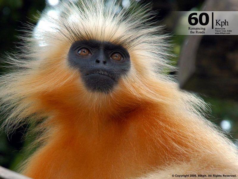 animales-graciosos-bonitos-simios-monos-4