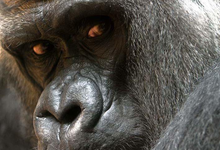 animales-graciosos-bonitos-simios-monos-5