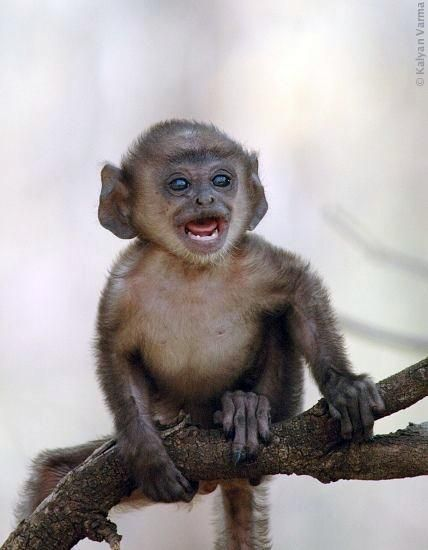 animales-graciosos-bonitos-simios-monos-7