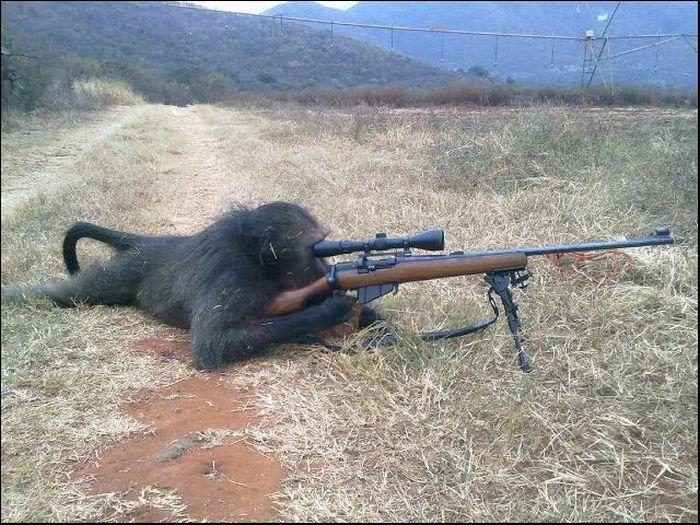 animales simpaticos monos