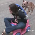 El perro coche