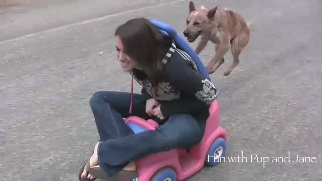 coche impulsado perro video