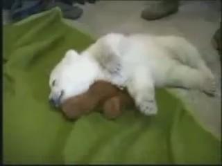 cria osito polar cachorro durmiendo
