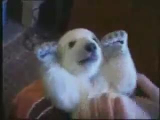 cria oso polar cachorro bonito