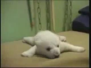 cria oso polar cachorro descansando