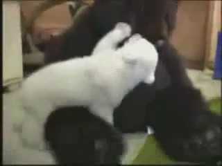 cria oso polar cachorro peluche video