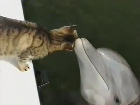 gato delfin jugando 1