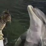 gato delfin jugando 3