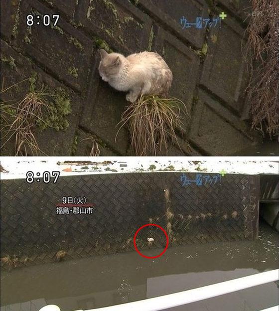 gato-tsunami refugiado