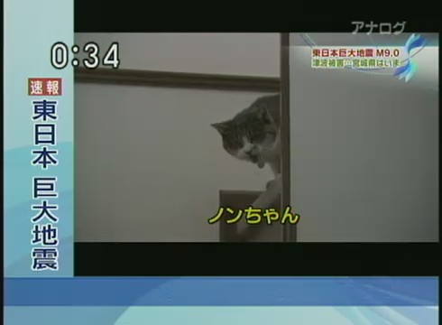 gato tsunami terremoto japon superviviente