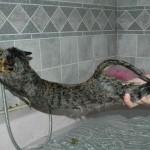 Gatos bañándose