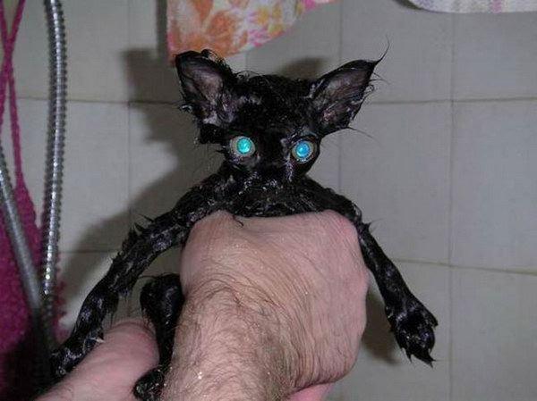 gatos agua bano mojados