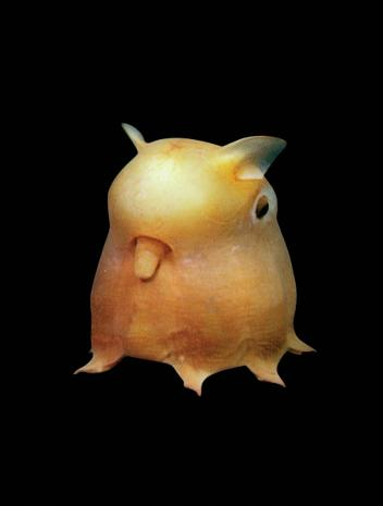 grimpoteuthis pikachu pokemon pulpo dumbo