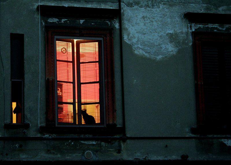imagenes-arte-gato-ventana