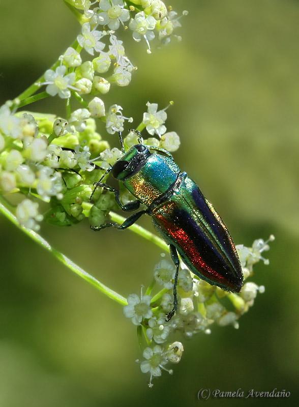 insecto multicolor colores