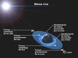 luna sol mareas gravitatorias vivas muertas