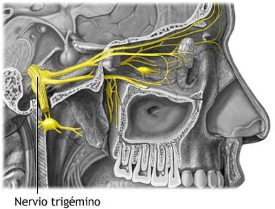 nervio trigemino cabeza boca oido