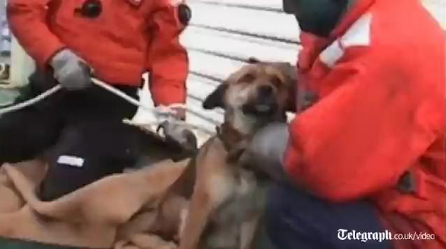 perro tsunami japon 21 dias mar kesennuma