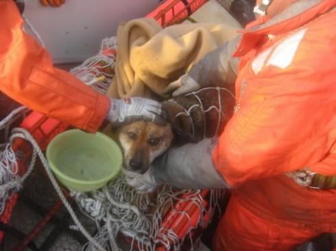 perro tsunami japon 21 dias mar rescatado