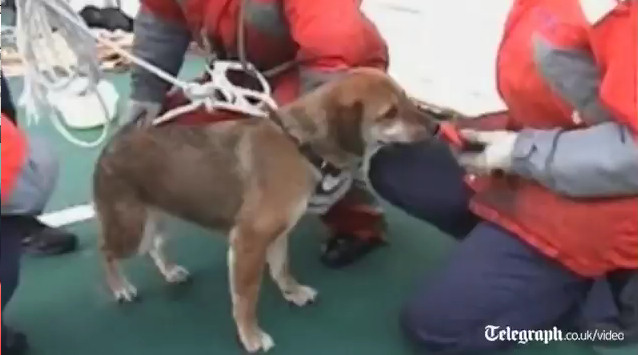 perro tsunami japon 21 dias mar rescate