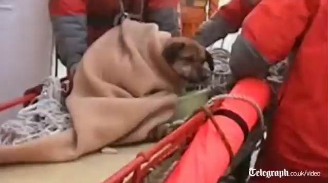 perro tsunami japon 21 dias mar salvamento