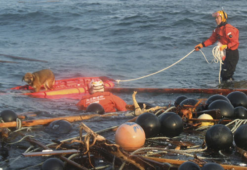 perro tsunami japon 21 dias mar terremoto