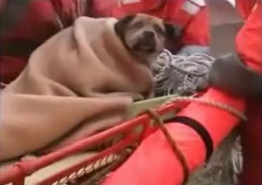 perro-tsunami-japon-21-dias-oceano-rescatado