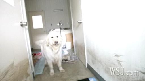 perros tsunami terremoto japon sobrevivientes
