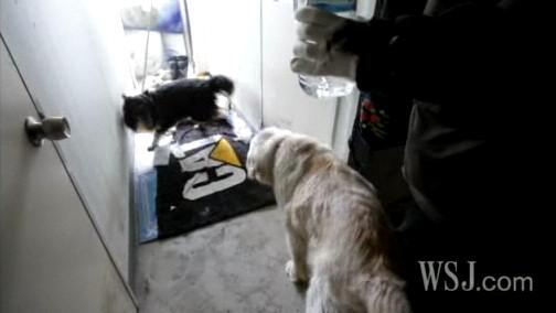 perros tsunami terremoto japon stoa melody