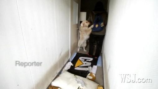 perros tsunami terremoto japon supervivientes