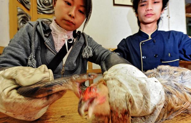 pollo mordido serpiente plato chino china