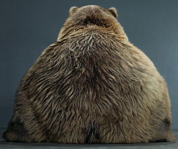 animales-graciosos-animal-gordo-obeso
