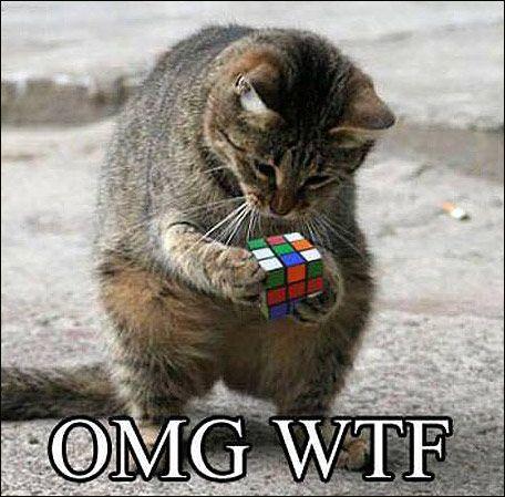 animales-graciosos-gato-rubik
