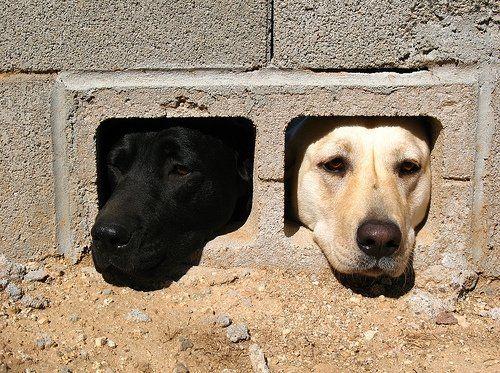 animales-graciosos-perros-bicolores