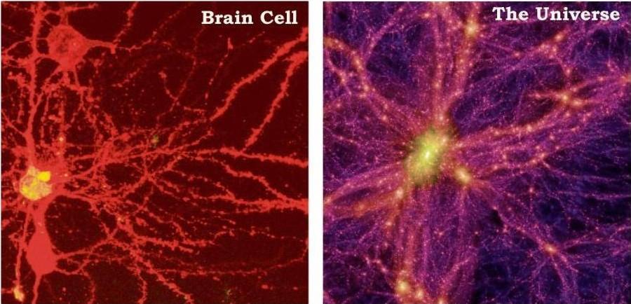 celulas cerebro universo