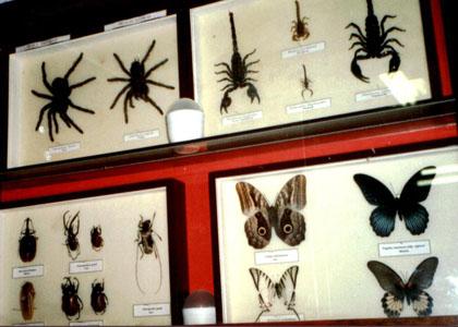 coleccion-invertebrados