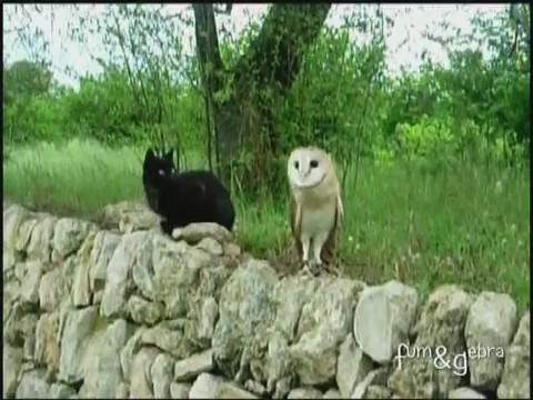 gato buho amigos jugando 0