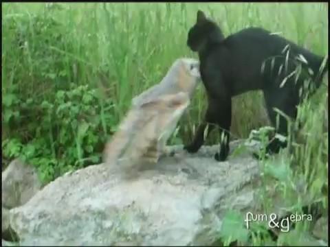 gato buho amigos jugando 2