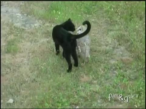 gato buho amigos jugando 4