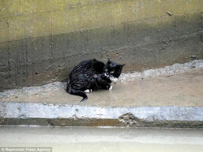 gato negro mojado atrapado agua