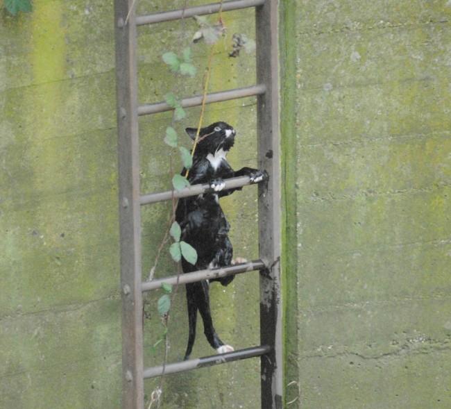 gato negro mojado escapando escaleras